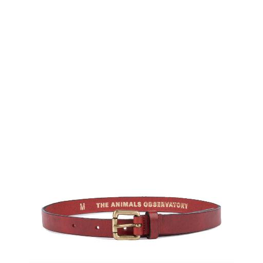 Kids shoe online The Animals Observatory belts Brown leather belt